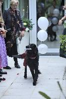 Hochzeit-Hund